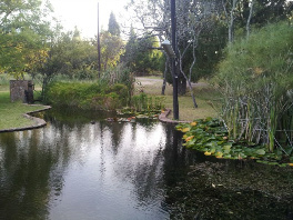 Ponds at Paradise
